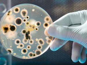 mikrobiokotnia
